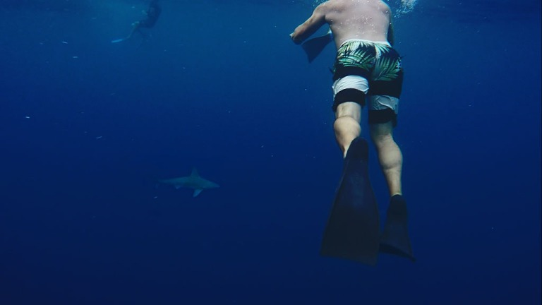 Cage-less Shark Diving in Oahu – Court & John